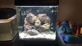 Marine fish tank and fish