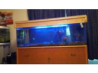 7ft Fish Tank ( Reduce for quick sales £750 )