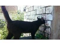 Free to good home female cat/kitten