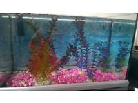50 LITRE FISH TANK WITH ACCCESERIES
