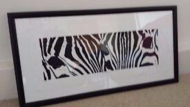 Framed limited edition zebra print