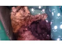 Tortoise shell female cat free to a good home