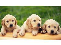 Puppy Class - Ipswich