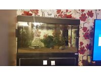 Fluval 125ltr Tank and Stand