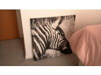 zebra canvas immaculate condition