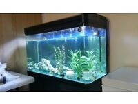 4ft large fish tank 360L