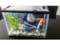 Starter Fish Tank for sale