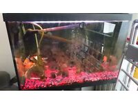 Cold water fish tank set up including fish