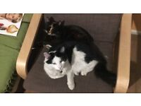 A very friendly male and female cats are looking for a new home