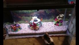 Clear seal fish tank with stones