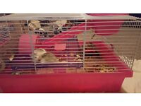 two dwarf hamster and cage