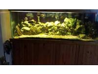 700l 6ft fish tank (fish, equipment and decorations included)