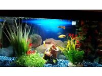 Starter Fish Tank with all Accessories