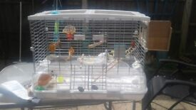 Big budgie cage need gome asap