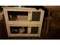 English rabbits Male and Female with double hutch