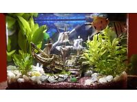 !!! COMPLETE SET UP FISH TANK AND FISH !!! 40L !!! GOOD PRICE !!!