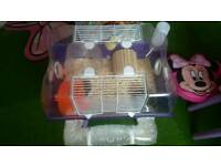 Hamsters with cage