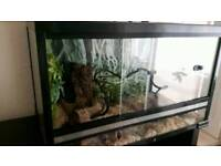 Large Reptile vivarium with extras