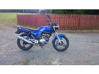 Yamaha YBR 125 Low Mileage 125cc