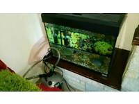 Fluval tank fish 90L & Tetra external filter.