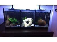 Aqua One Betta Trio Tropical Aquarium Fish Tank with Stand!