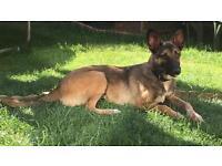 Flocky Malinoa Mixed Breed Rescue Dog