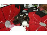free baby kittens