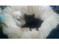 Black, male 3 month old kitten.