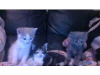 Beautiful kittens ready to go to good homes