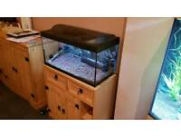 56L fish tank