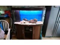 Juwel vision bow front 260l fish tank