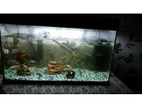 Fish Tank & Fish for sale.