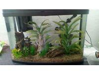 Panorama 64 litre fish tank