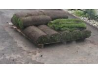 Urgent - Turf - good quality - buyer to collect - over 12 square metres
