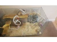2 male rats+cage