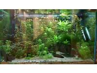 Tropical fish tank with fish and accessories