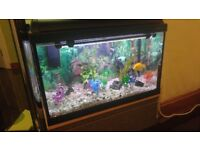 Fish tank 2fts x 1ft x 18inches