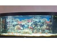 9 red belly piranhas
