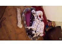 3 dalmation boy puppies for sale