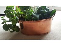 Hand Made Copper Plant pot with Brass Handles