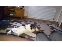 4 year old male dog for rehoming