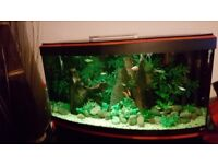 4ft BOWED FISH TANK FOR SALE