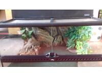 Leopard gecko very tame.handled daily .includes viv heatmat snd accessories .