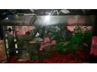 Cichlids for sale