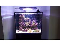 Marine aquarium - Full setup