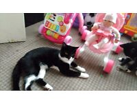 2 male cats marley and socks neef a forever loving home, must go together