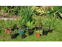 🌼🌻🌺🌸 PERENNIAL PLANT BUNDLE 💮💐🌻🌹🌺