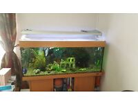 Juwel Rio 240l Fish Tank & Stand + Full Setup + Fish