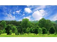 Ballygarvey Tree Services