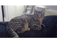 6 months old male kitten needs rehoming